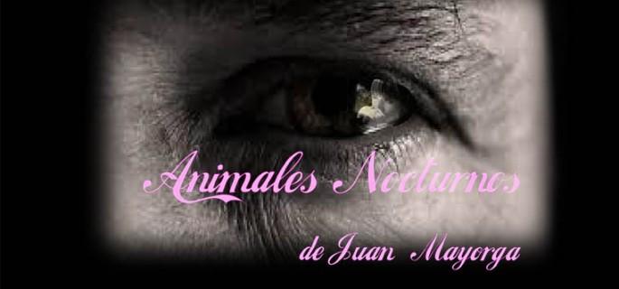 animales-nocturnos-berriozar